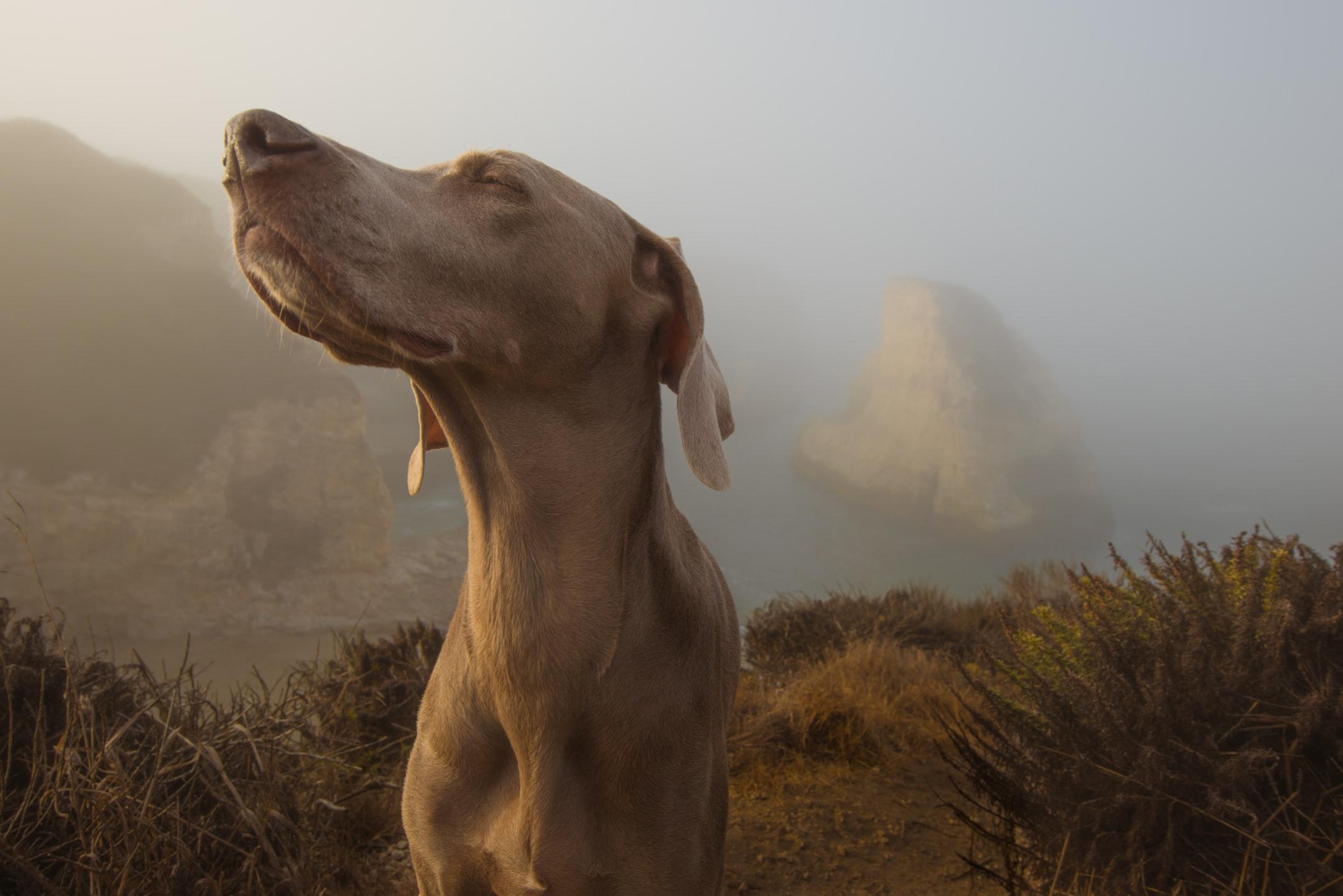 O faro do cachorro é poderoso aponto de detectar odores específicos de doenças.