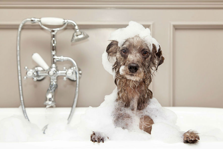 dono-primeira-viagem-banhos