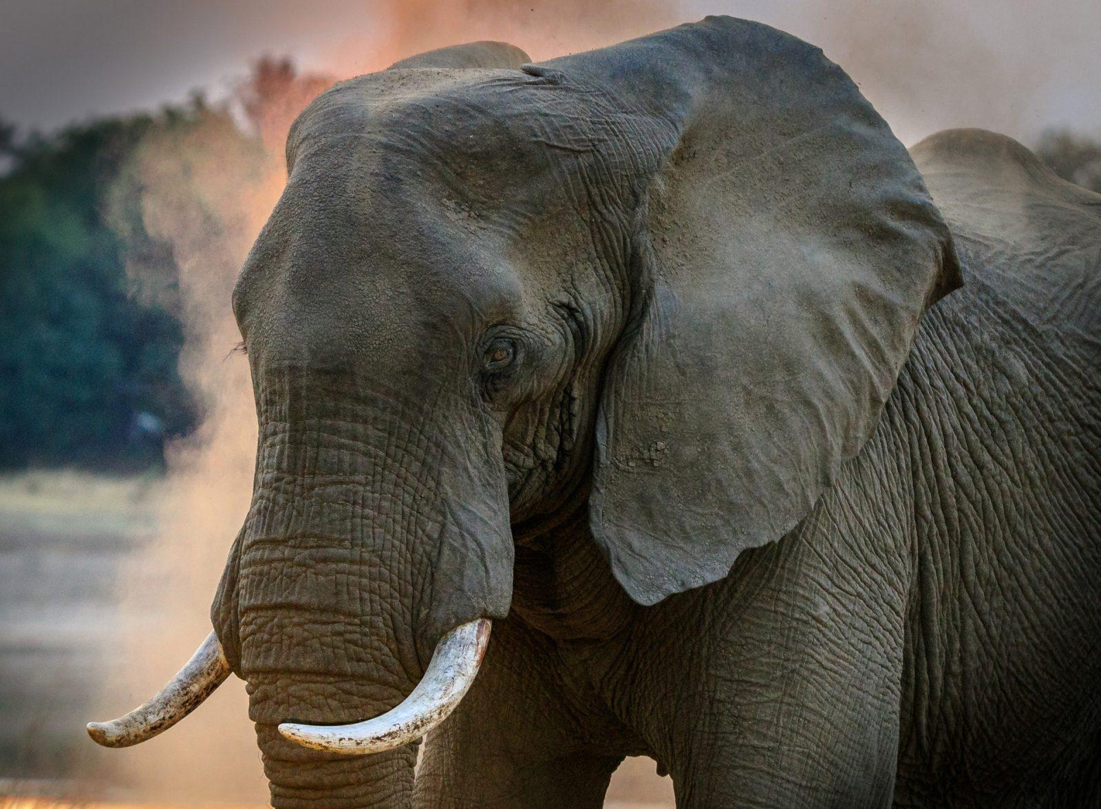 O elefante é um animal pacato e vegetariano.