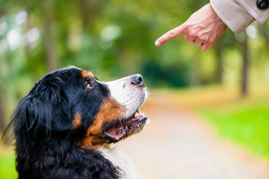Como adestrar um cachorro: Cachorro sendo corrigido verbalmente durante o treino