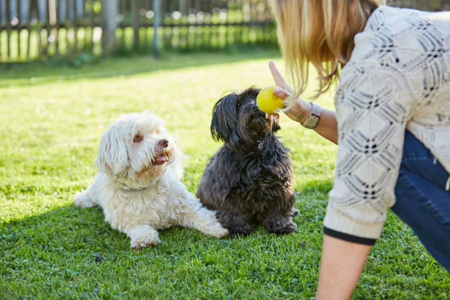 Como adestrar um cachorro: achorros sendo treinados juntos.