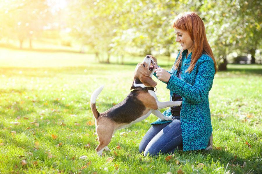 Como adestrar um cachorro: cachorro sendo treinado no parque através de brincadeiras.