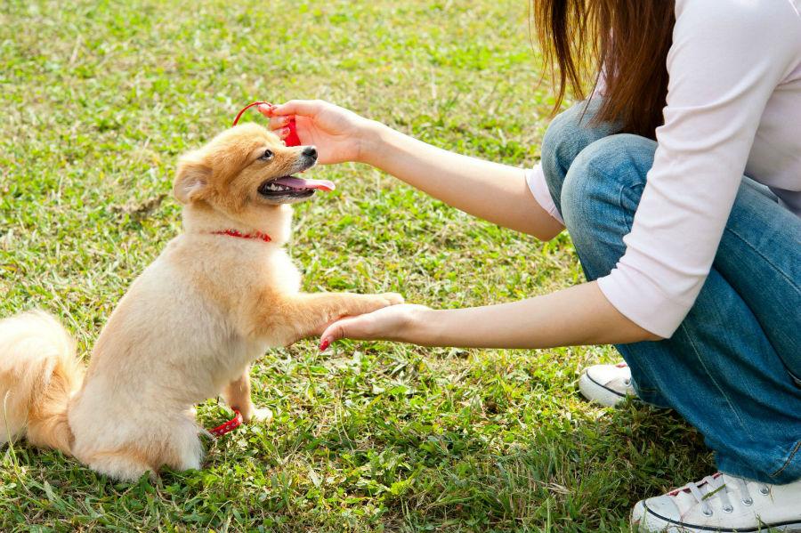 Como adestrar um cachorro: cachorro praticando o seu treinamento.