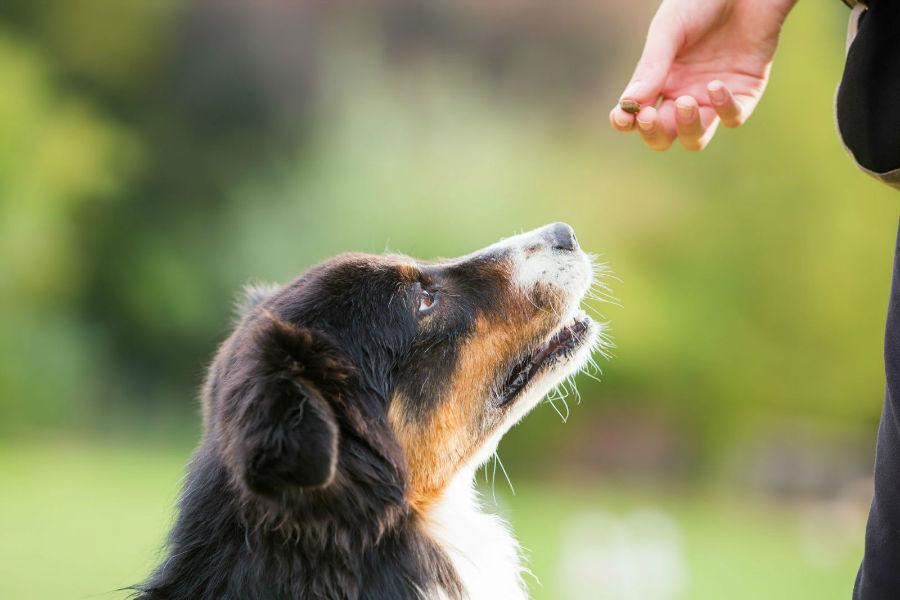 estender-longevidade-cachorro-adestre