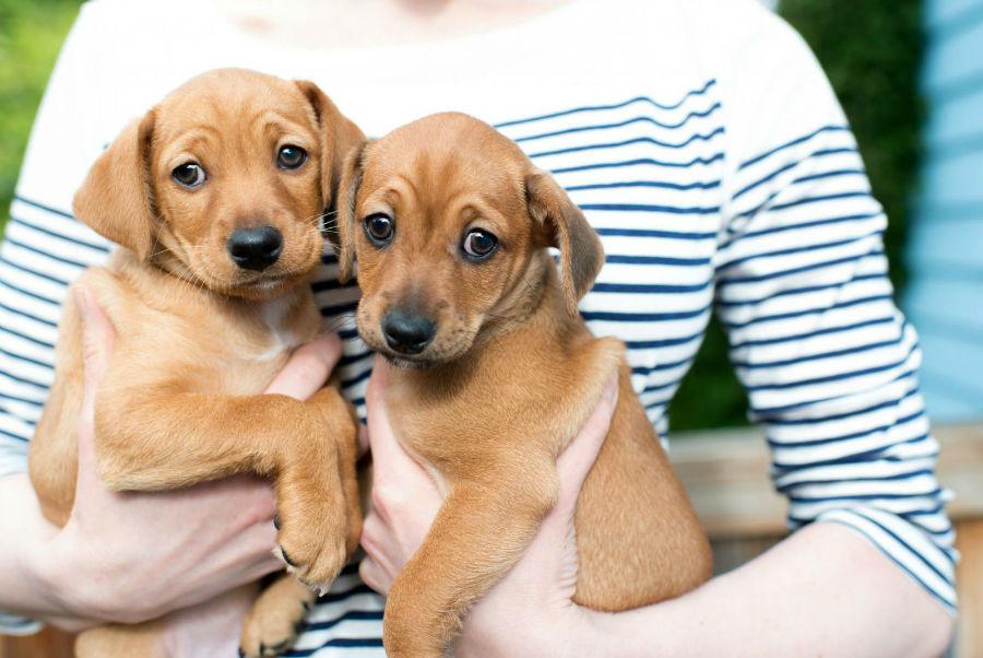 estender-longevidade-cachorro-criadores