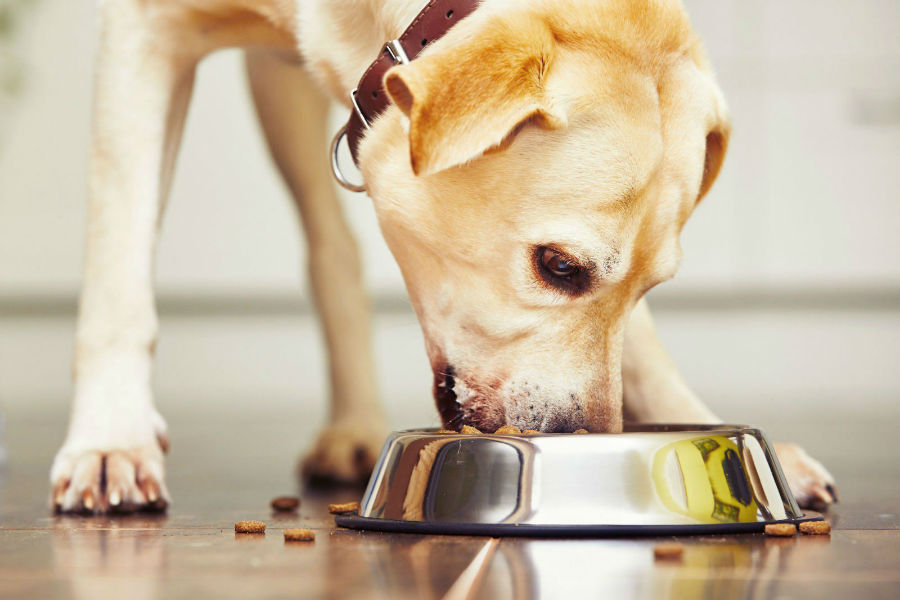 estender-longevidade-cachorro-dieta2