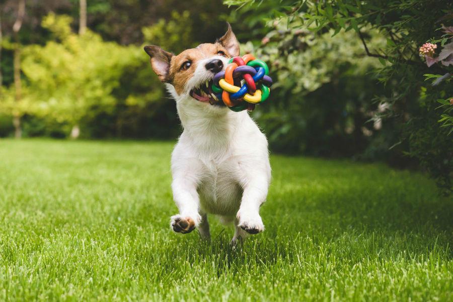 estimular-mente-cachorro
