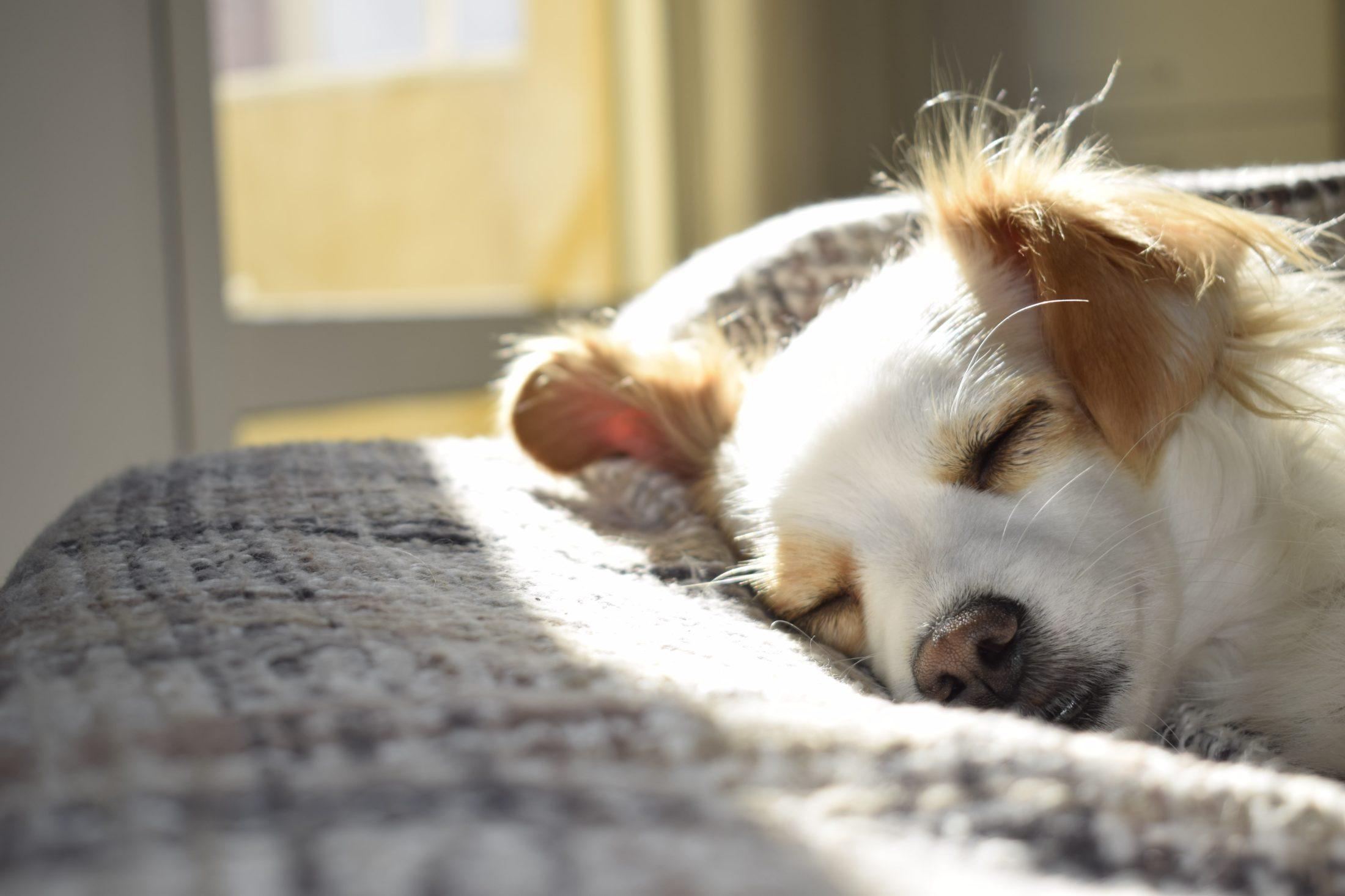 A eutanásia em cães é realizada quando não há mais como melhorar a qualidade de vida do animal.