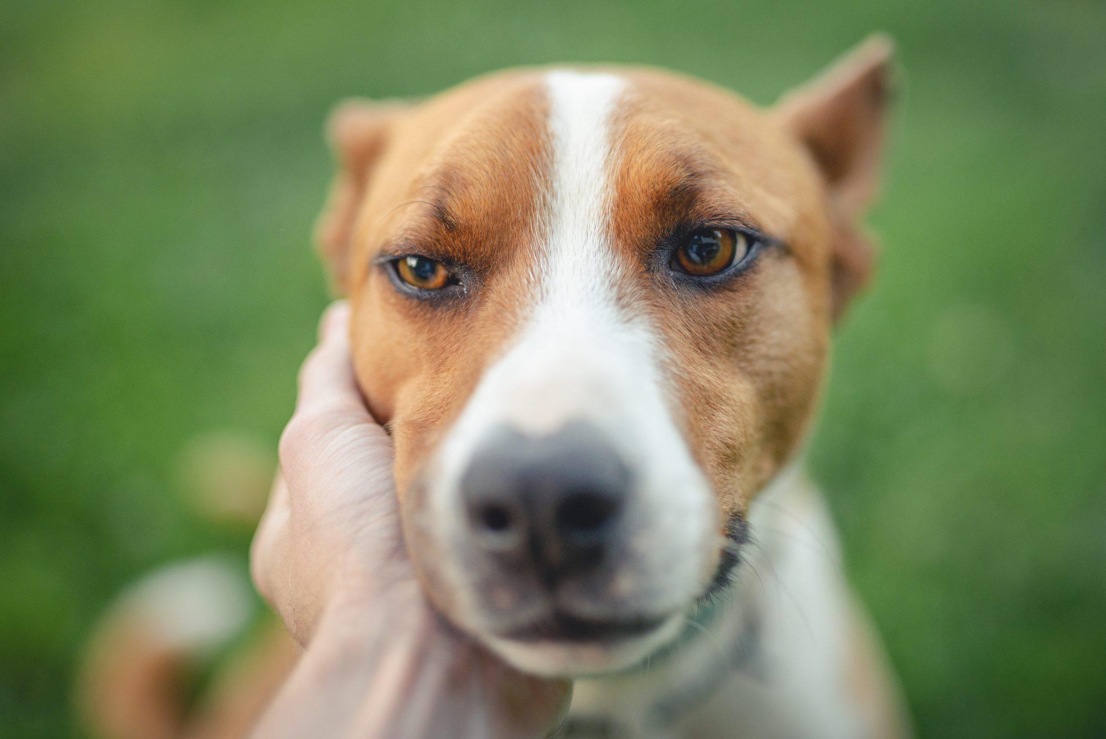 Leve o tempo que for preciso para decidir sobre a eutanásia em cães.