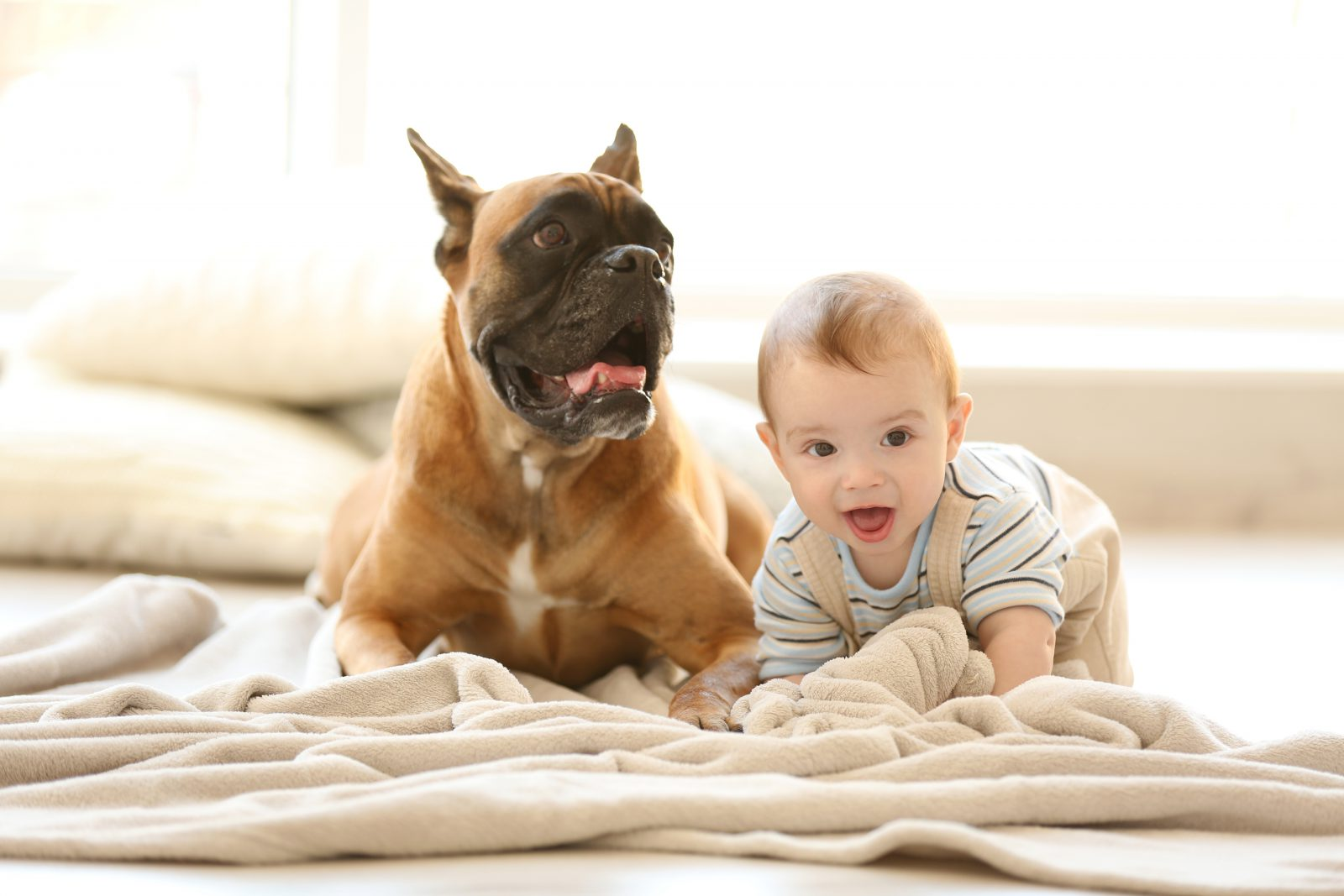 fatos-bizzaros-caes-criancas-2-anos