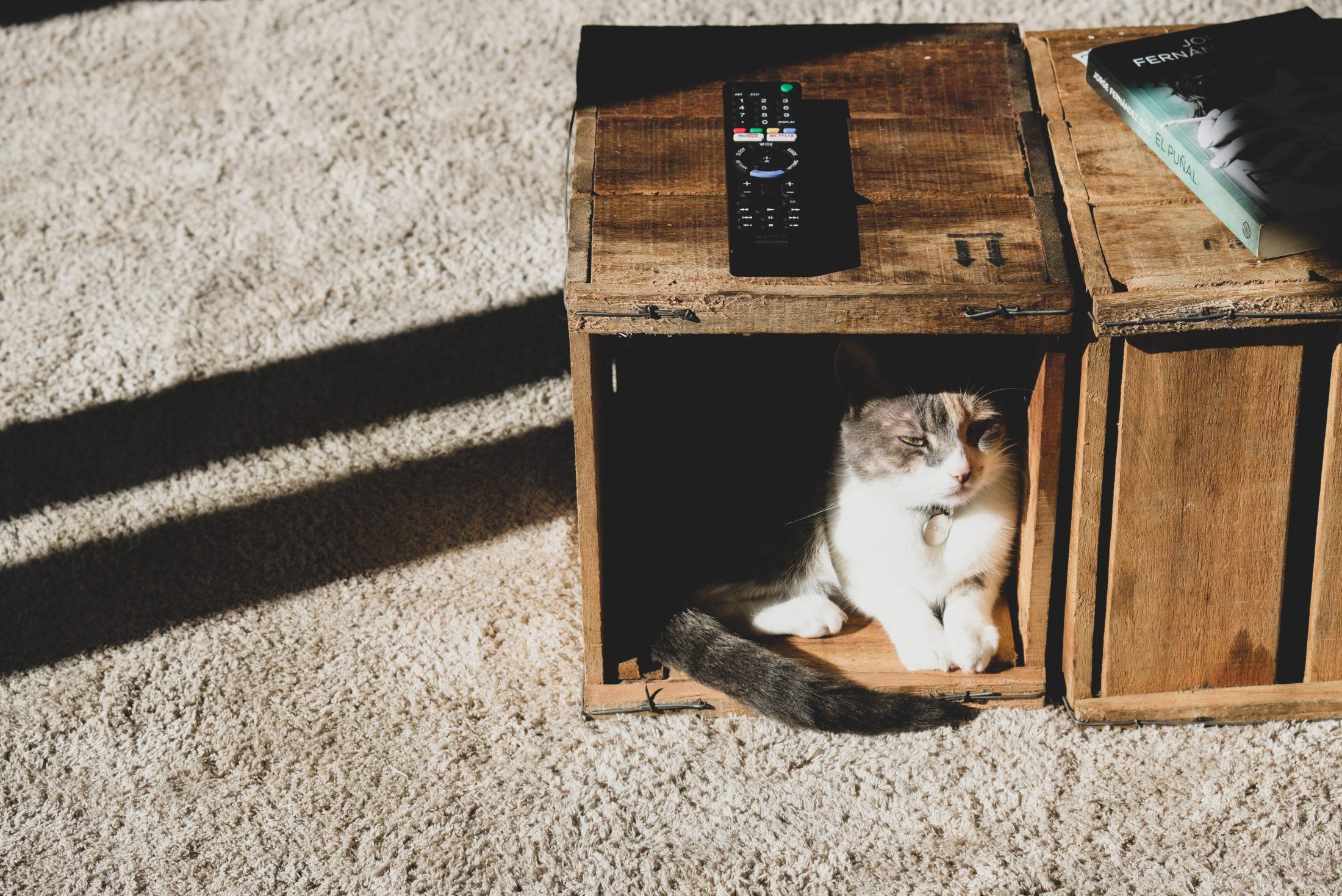 gato dentro do nicho da mesa de centro na sala