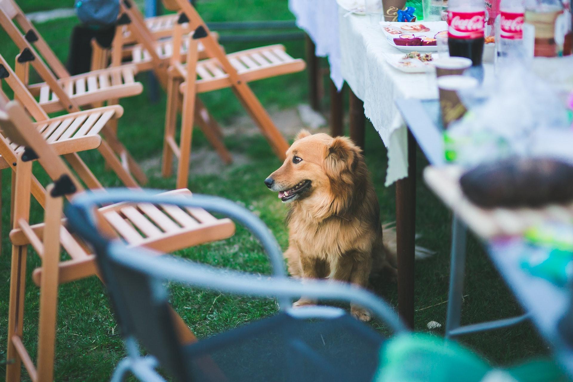 cachorro ao lado de uma mesa de festa de naiversário para cachorro.