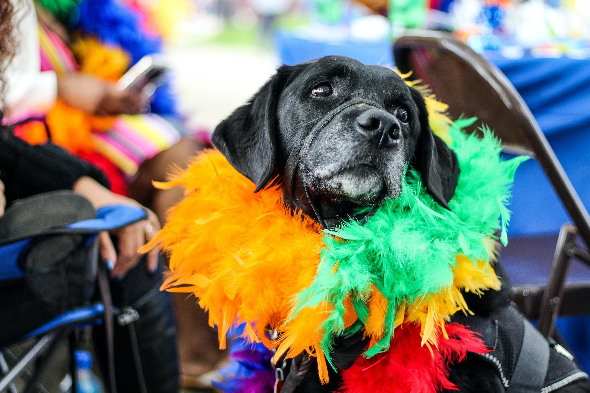 cachorro fantasiado para festa de aniversário