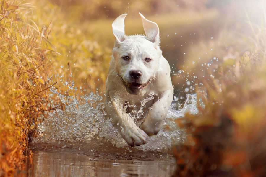 filhote-cachorro-exercitar