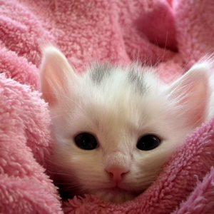 Saiba como cuidar de um filhote de gato