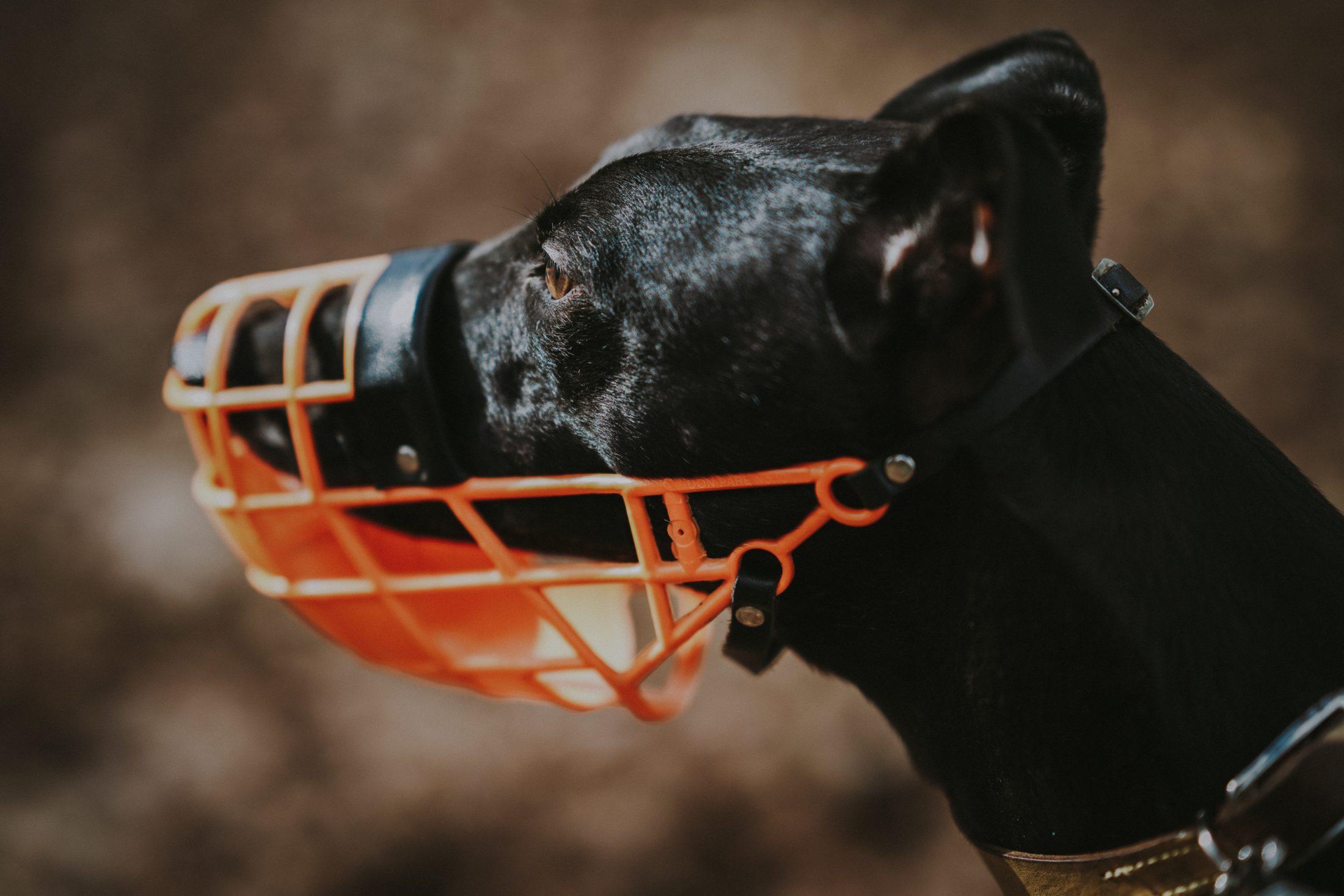 cachorro usando focinheira de grade