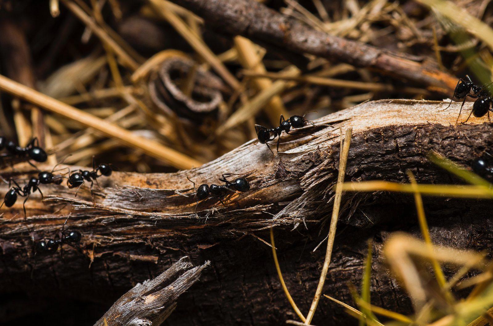 A formiga é um animal pequeno muito poderoso.