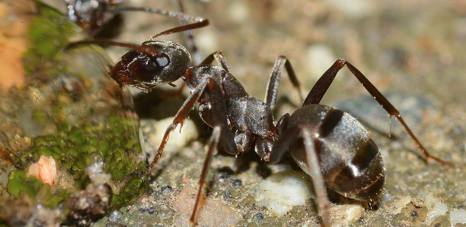 A formiga possui muitas carcaterísticas interessantes.