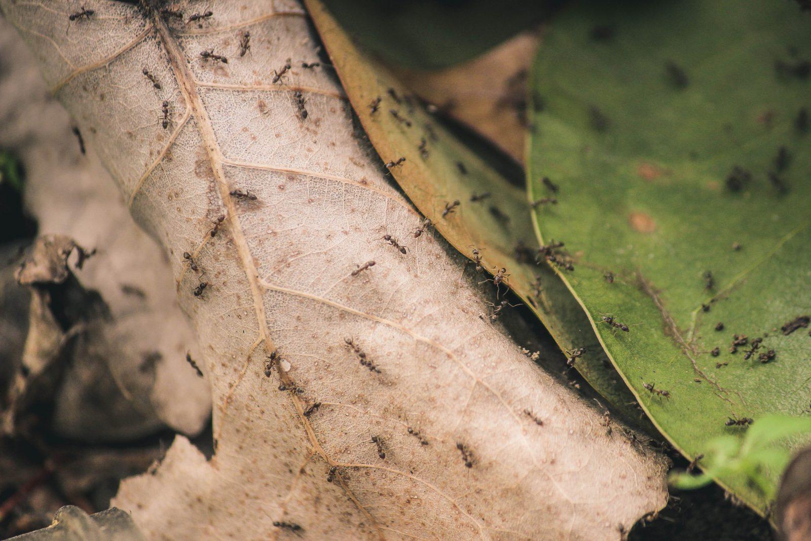 A formiga sabe trabalhar como ninguém