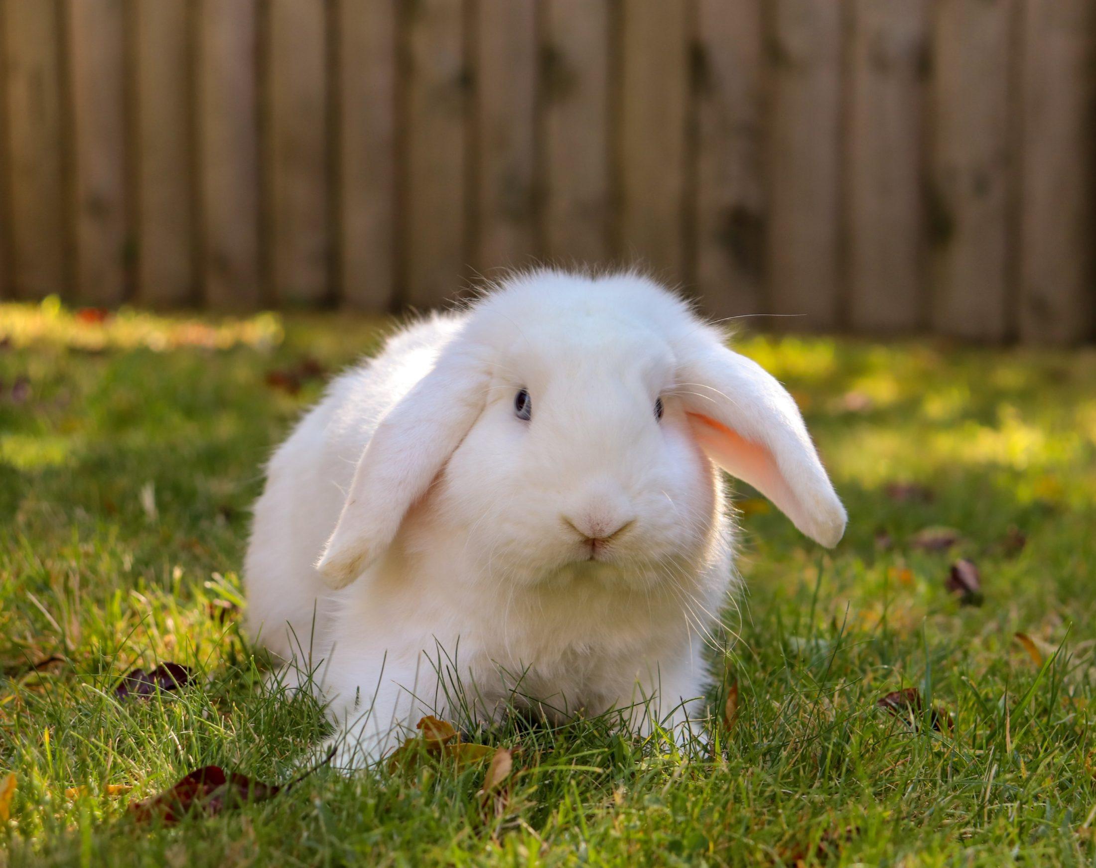 A gaiola para coelho pode trazer muitas vantagens.
