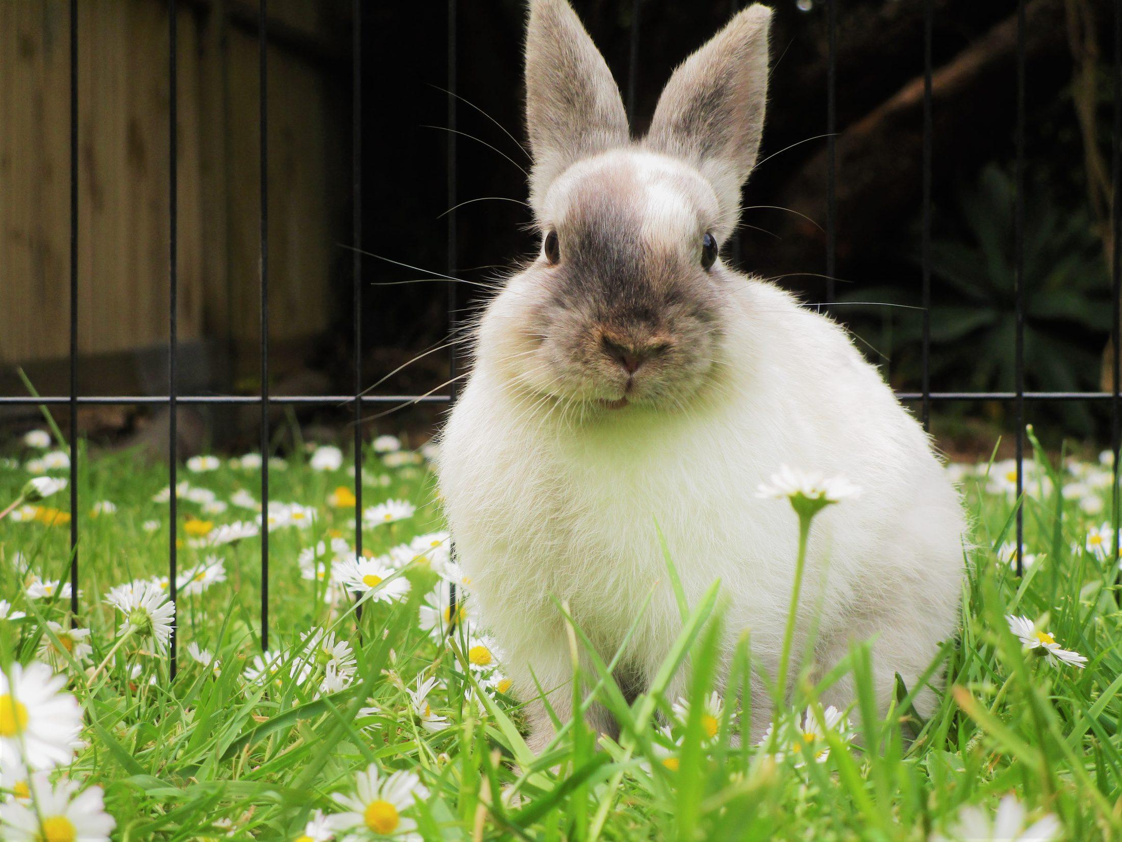 O melhor local para a gaiola para coelho é no chão e em local abrigado.