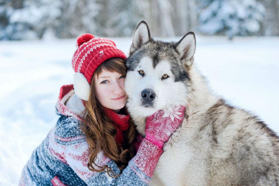husky-siberiano-personalidade