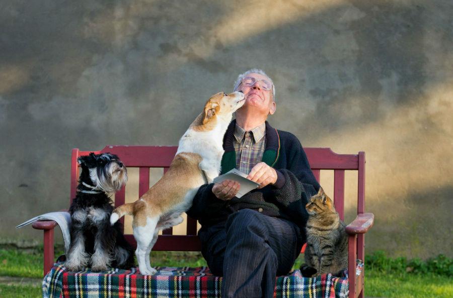 idade-canina-humana