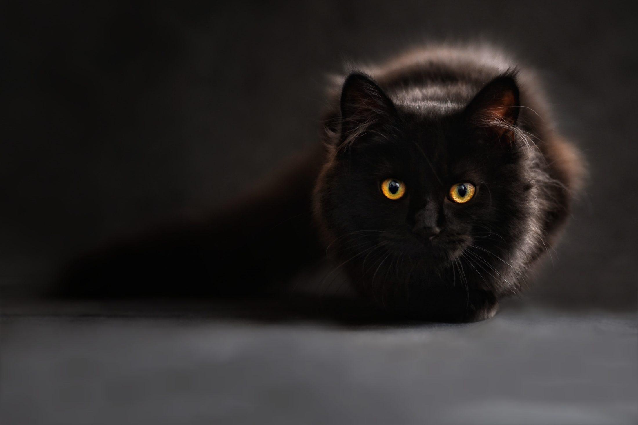 O instinto cacador de gato está presente nos gatos domésticos.
