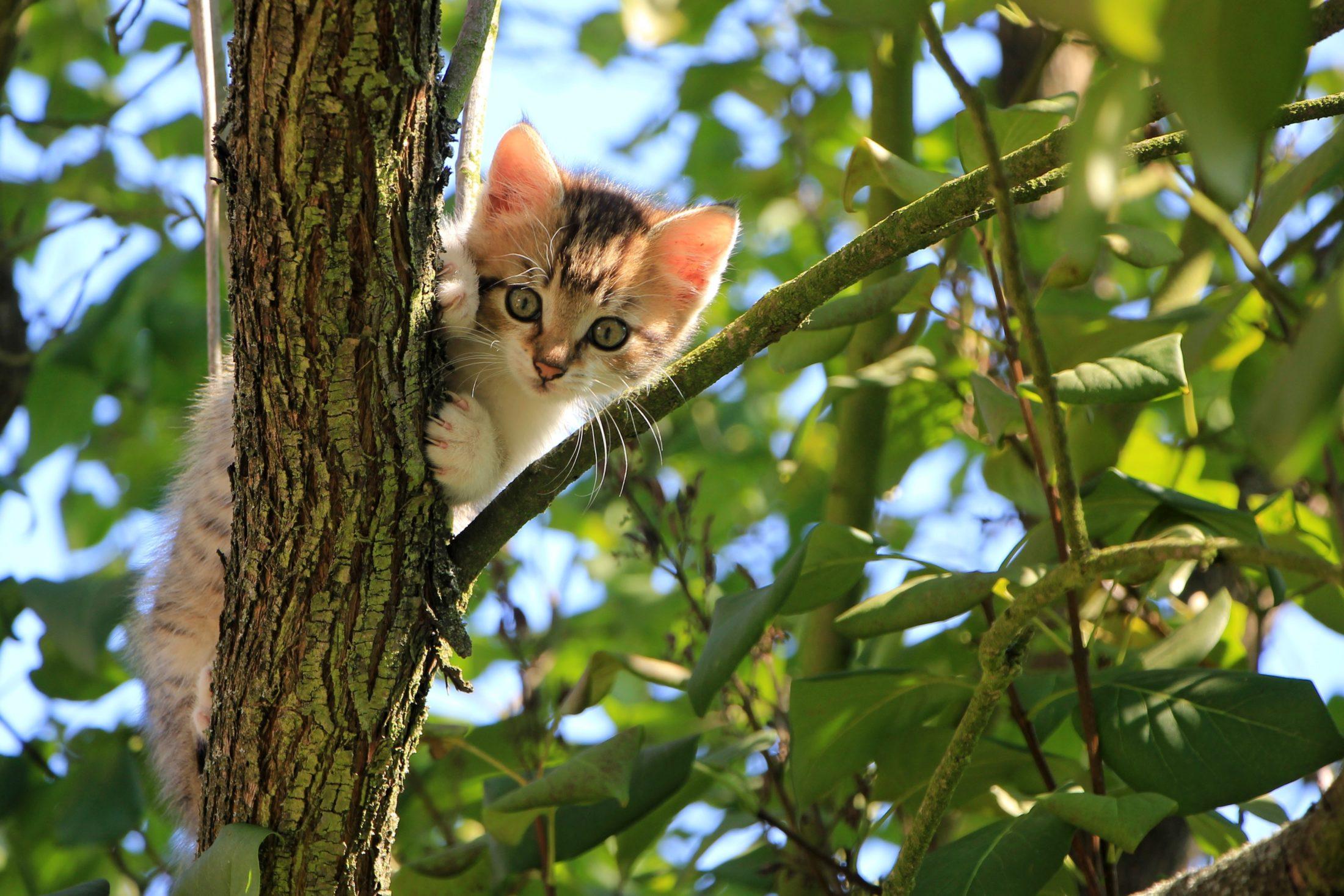 instinto cacador de gato em cima da árvore