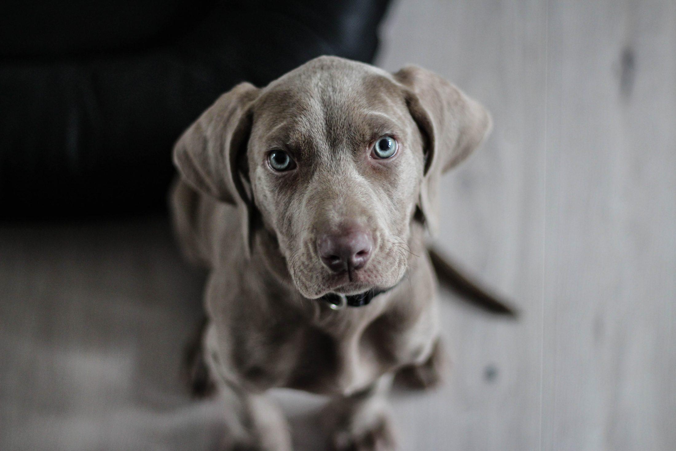 A inteligência animal refere-se à habilidade de aprender comandos e memorizar coisas, objetos, palavras...