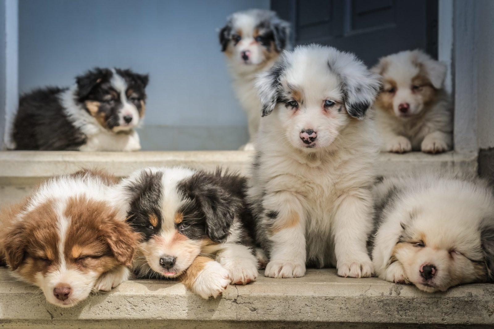 O cachorro é o bicho de estimação preferido das pessoas.