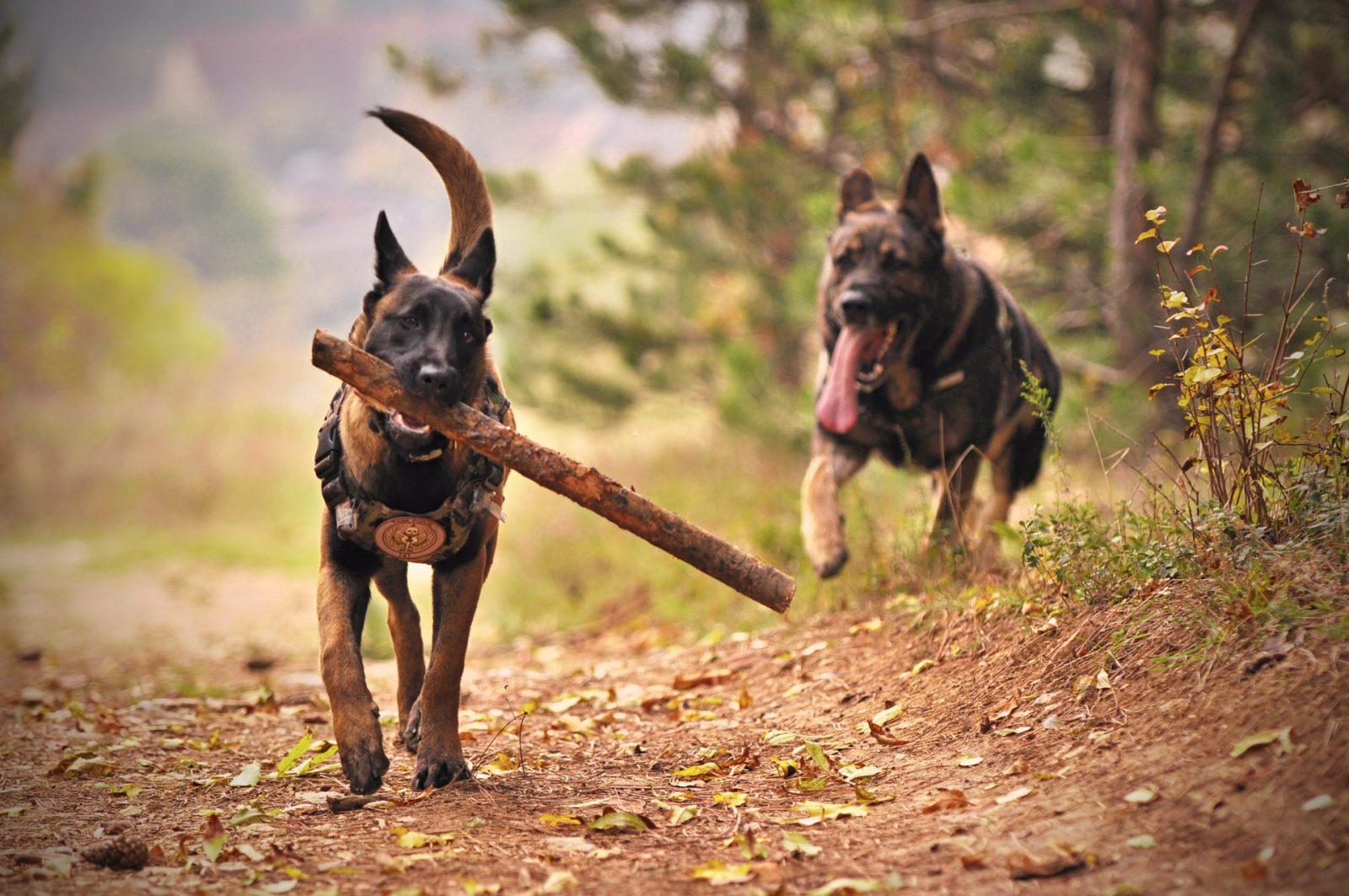 Os jogos para cachorro estimulam fisicamente e mentalmente a saúde dele.
