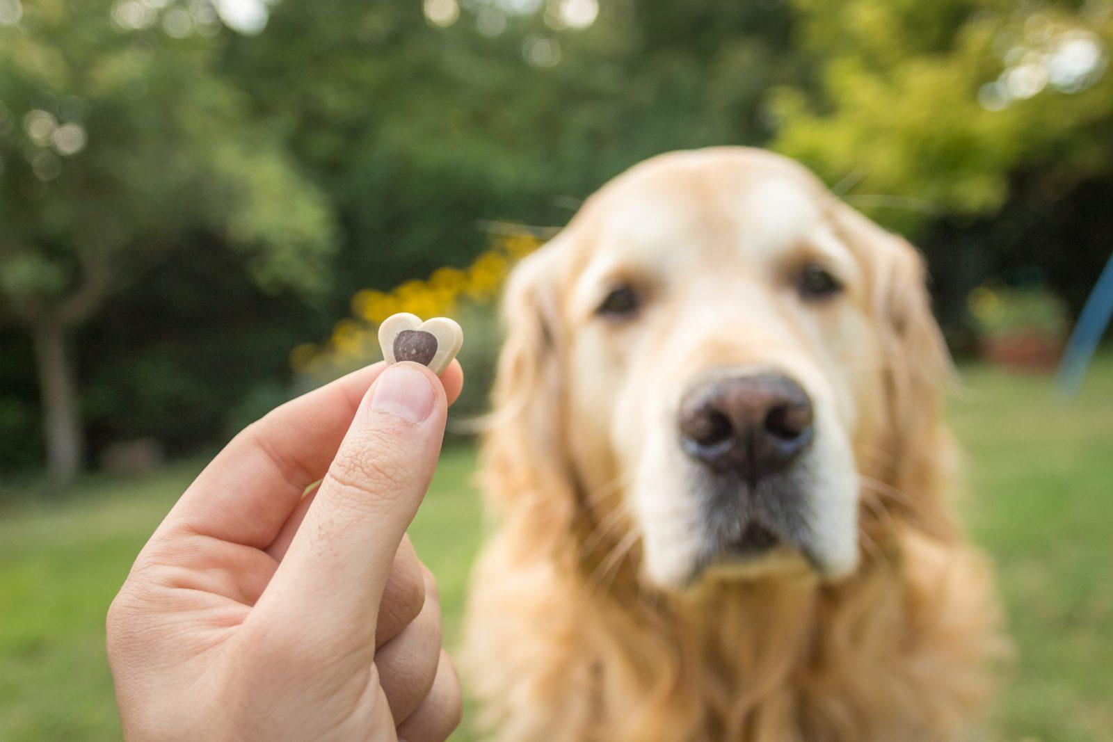 kit-primeiro-socorro-cachorro-guloseima