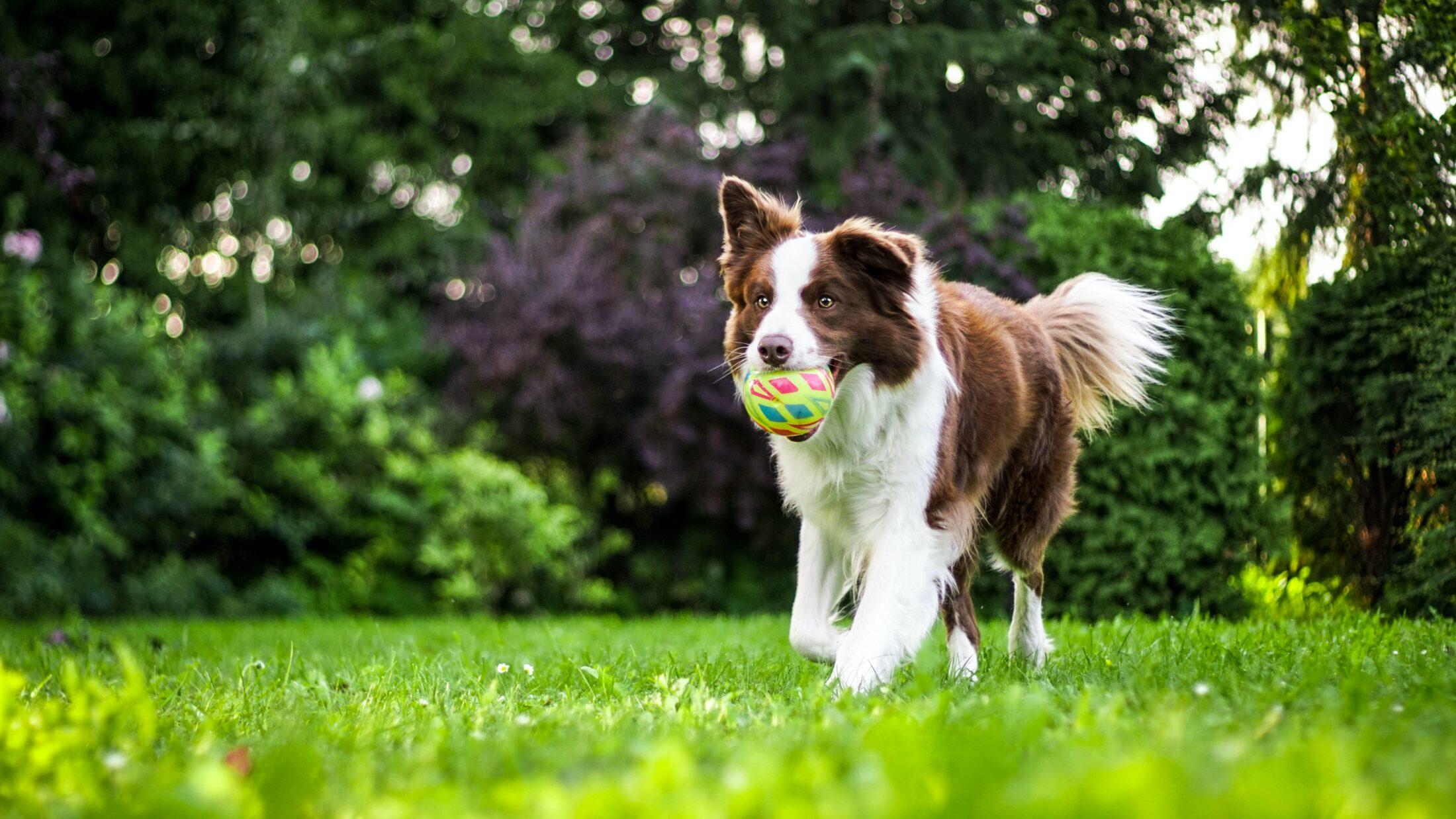 Para ter um lar à prova de pet, exercite bastante o animal e gaste a energia dele.