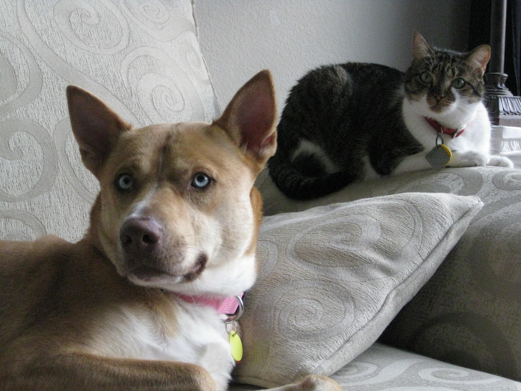 lar multi-pet com cachorro e gato no sofá da sala