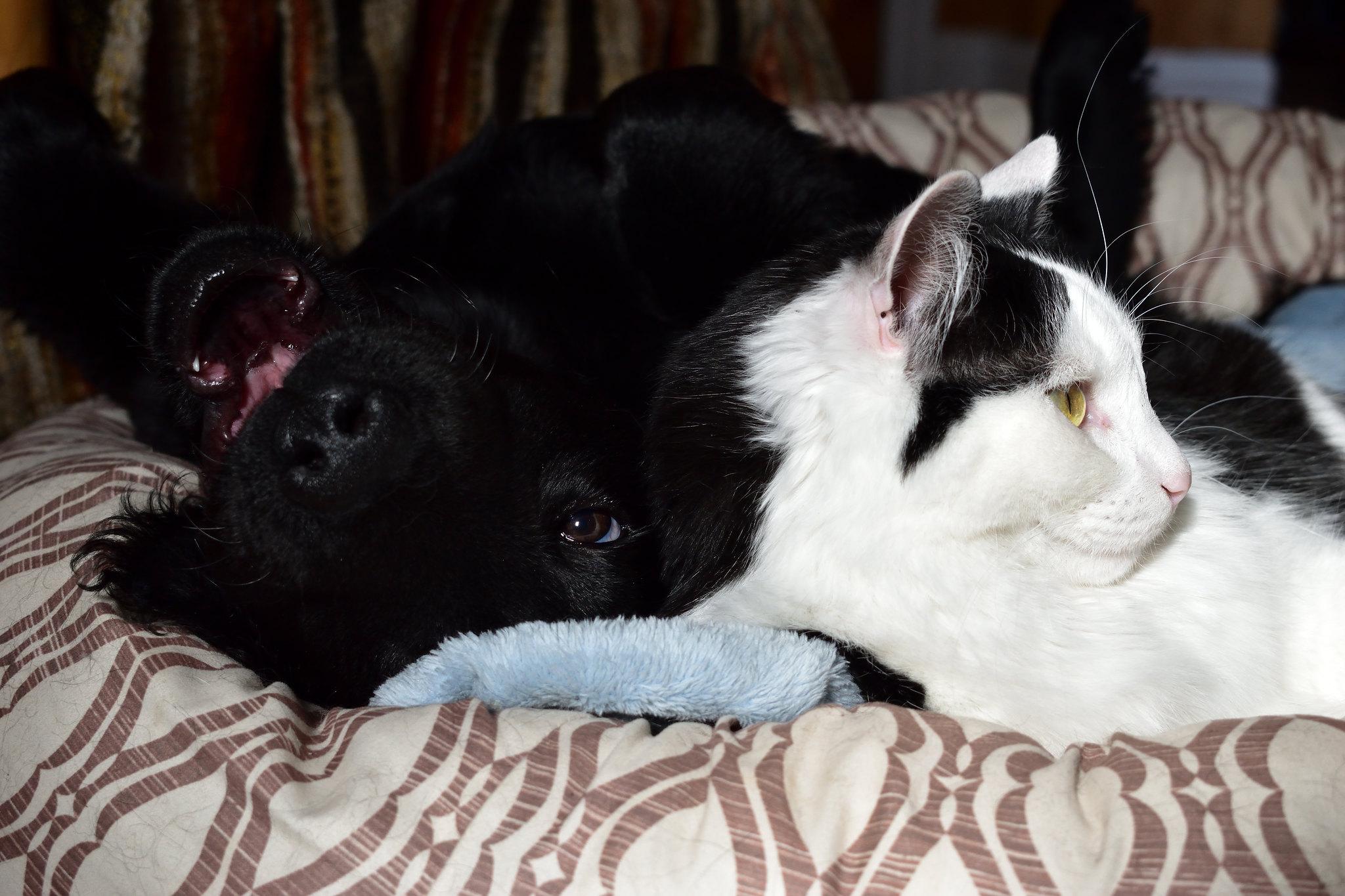 cachorro e gato brincando juntos em lar multi-pet