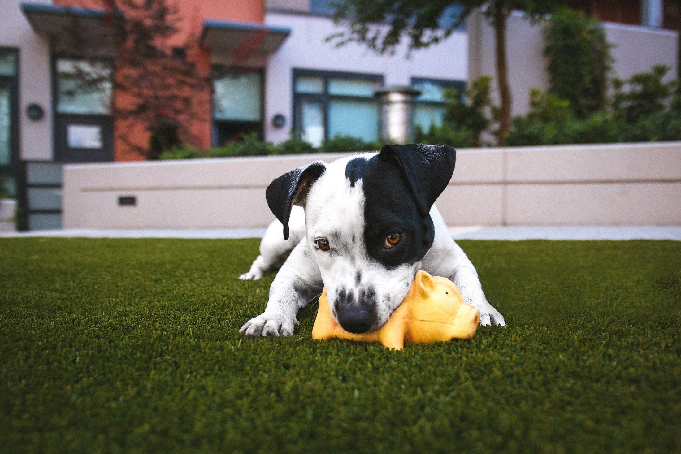 cachorro brincando no jardim com os melhroes brinquedos para cachorro.