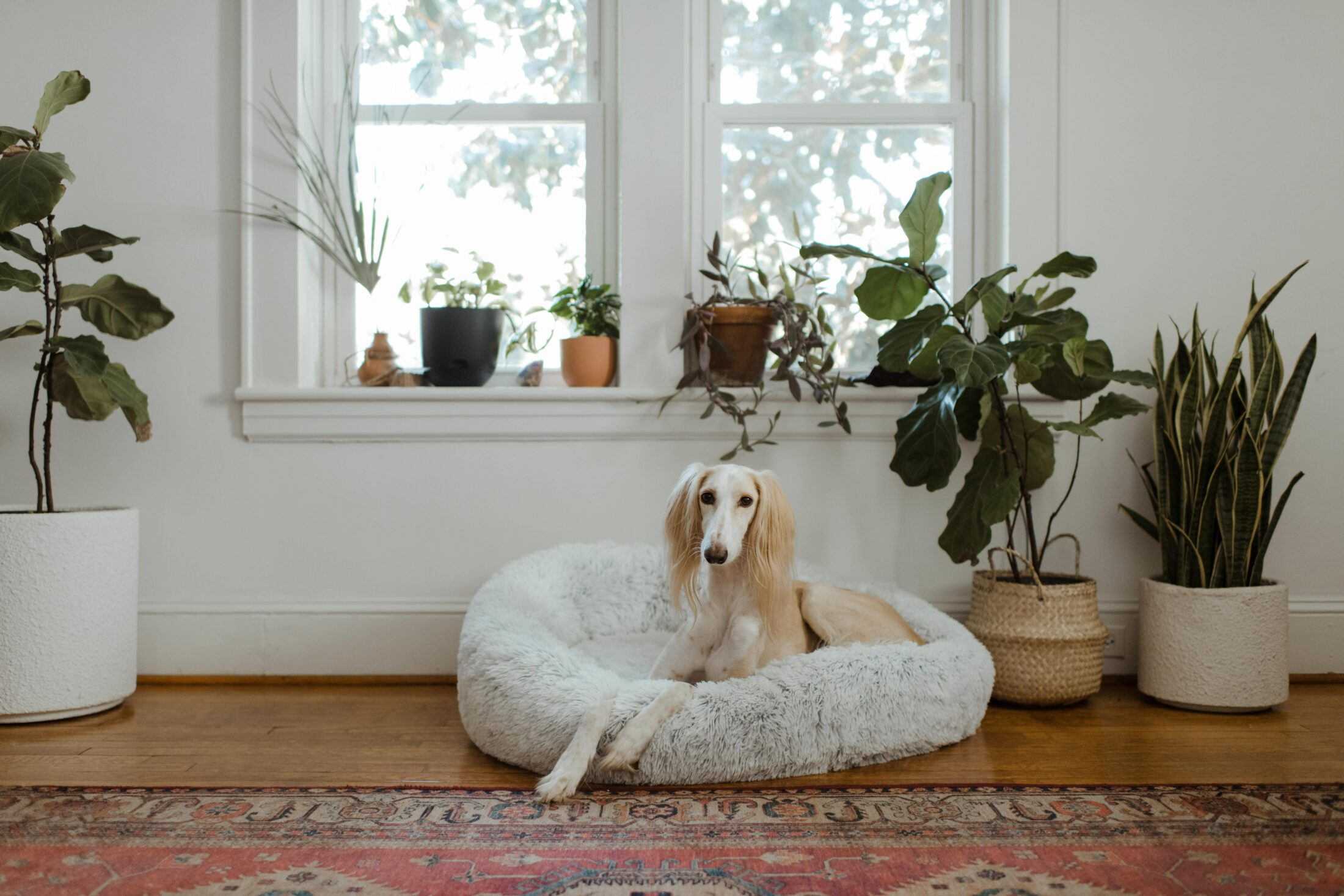 melhores camas para cachorro de luxo