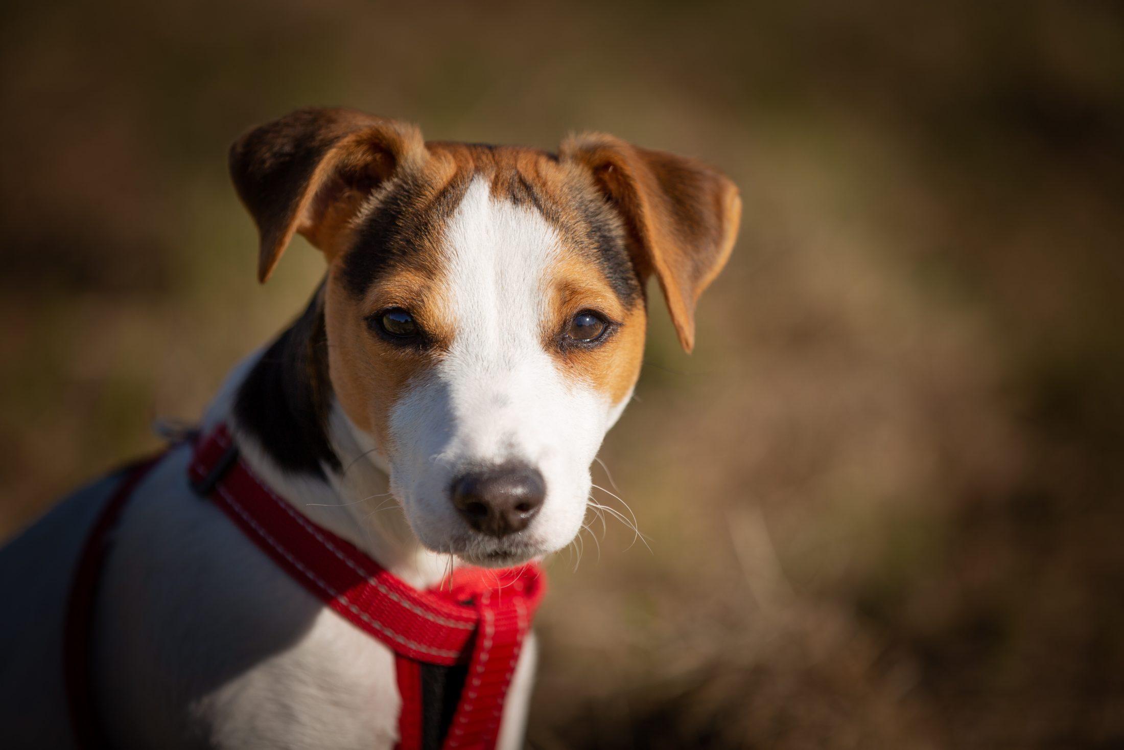 Não existe microchip para cachorro que possa rastrear o animal.