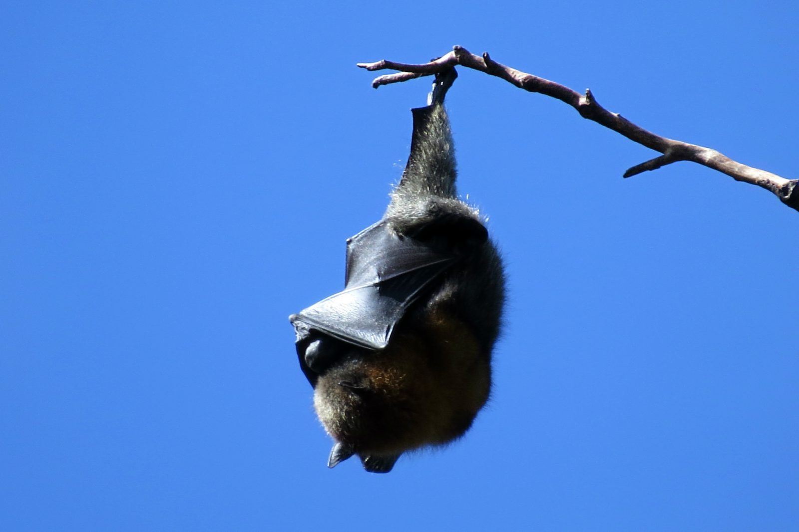 Os morcegos são animais noturnos que se alimentam de frutas e sangue.