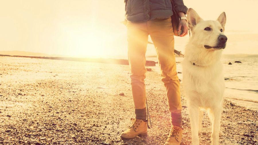 Atividades físicas para cães: Dono passeando com seu cachorro na praia.