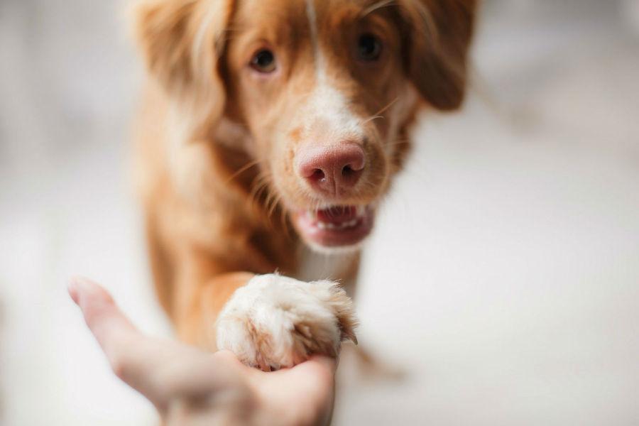 Atividades físicas para cães: Cachorro obedecendo a um comando básico de seu dono