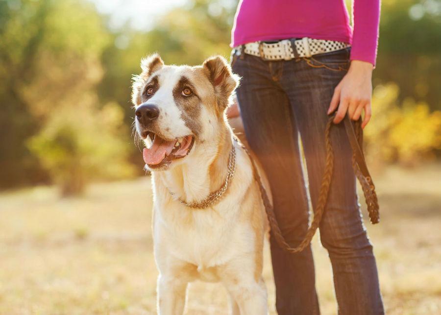 Atividades físicas para cães: Cachorro saindo para dar sua caminhada diária com sua dona