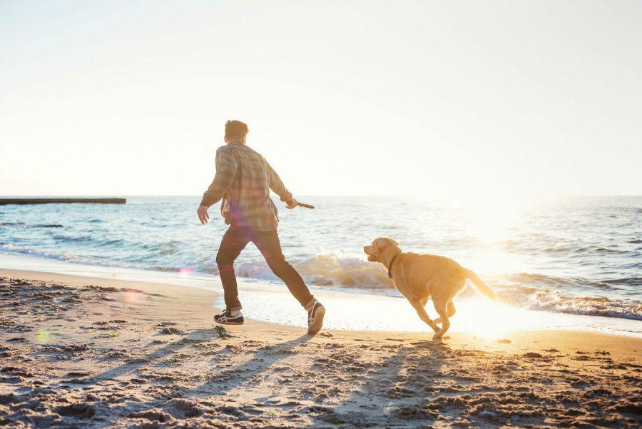 Atividades físicas para cães: Labrador retriever correndo na praia com dono em tarde ensolarada