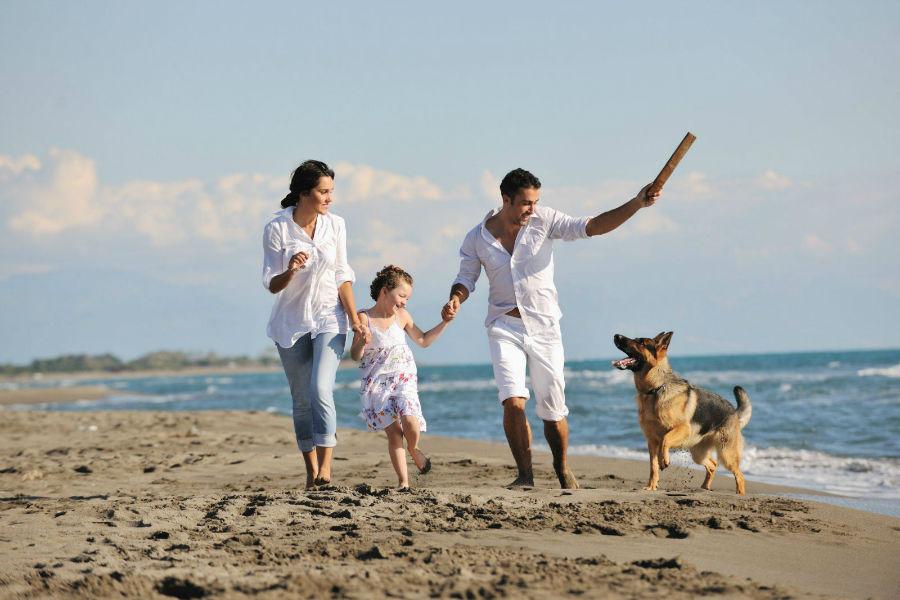 Atividades físicas para cães: Família interia brincando juntos na praia com seu Pastor Alemão