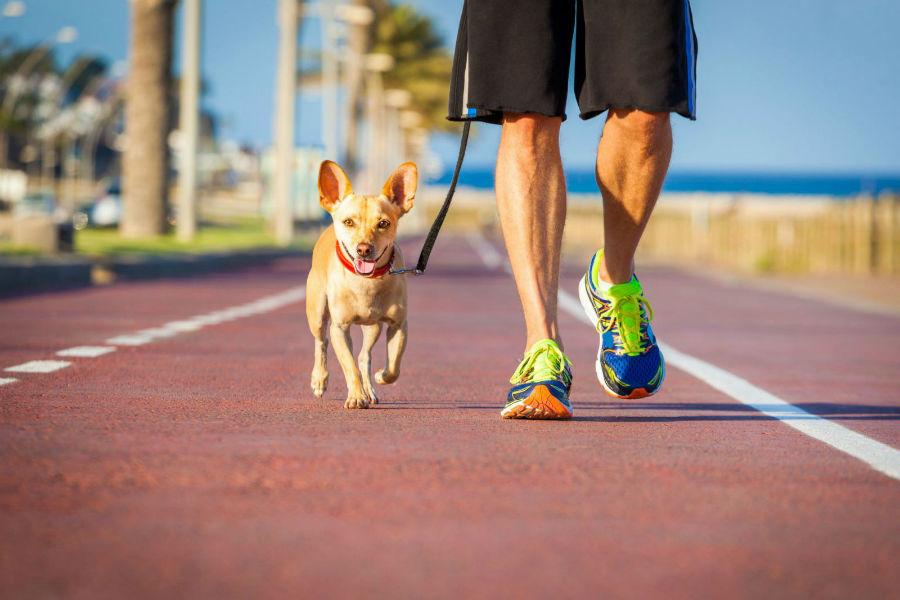 Atividades físicas para cães: cachorro e dono caminhando juntos na ciclovia na orla da praia.