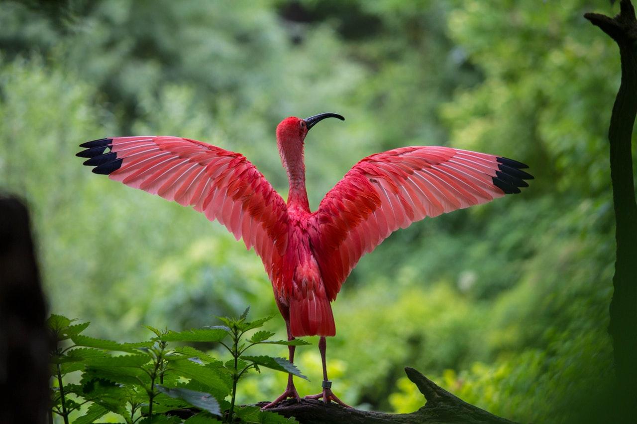mundo animal aves