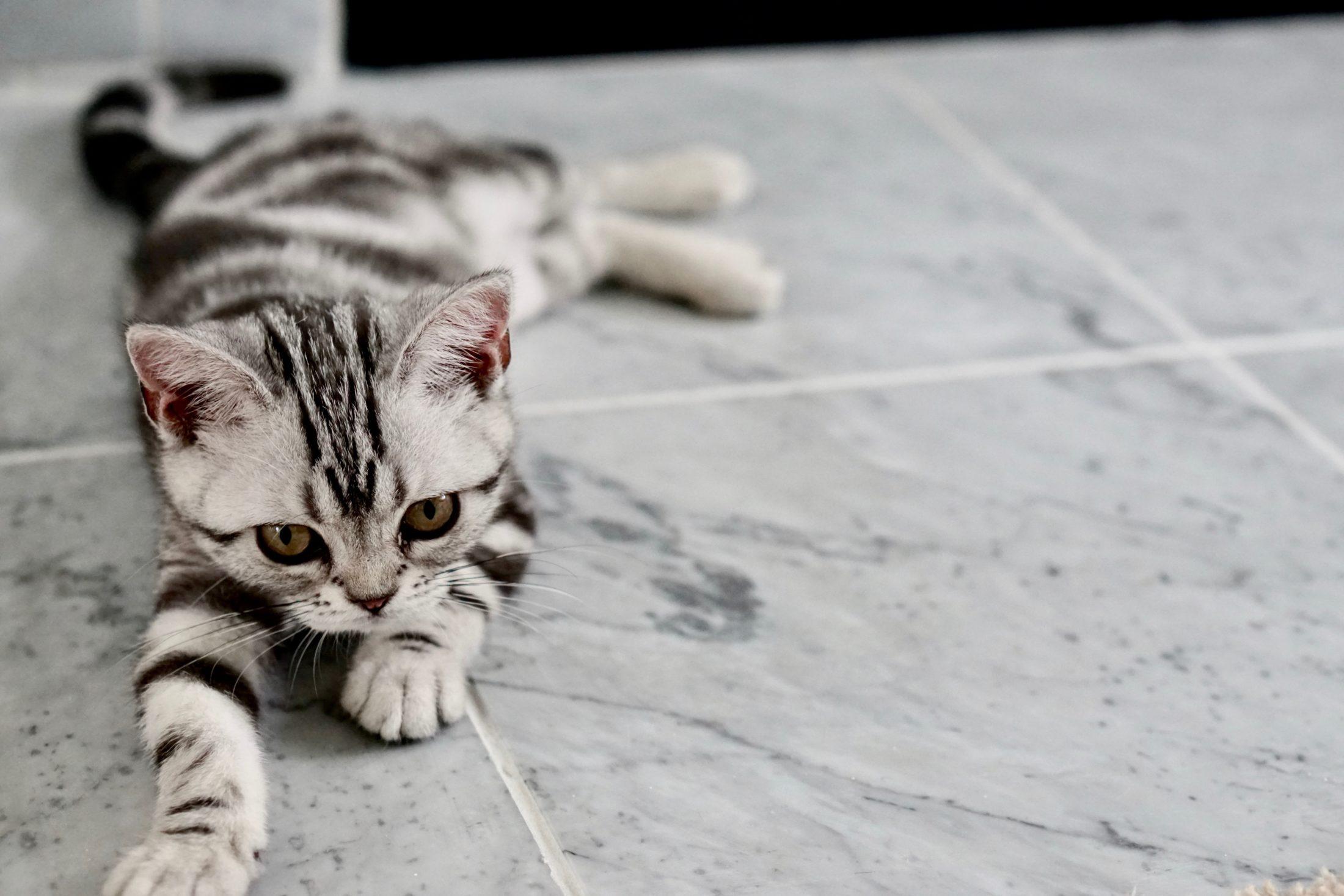Não importa o nome para gato que você dá, eles aprendem.