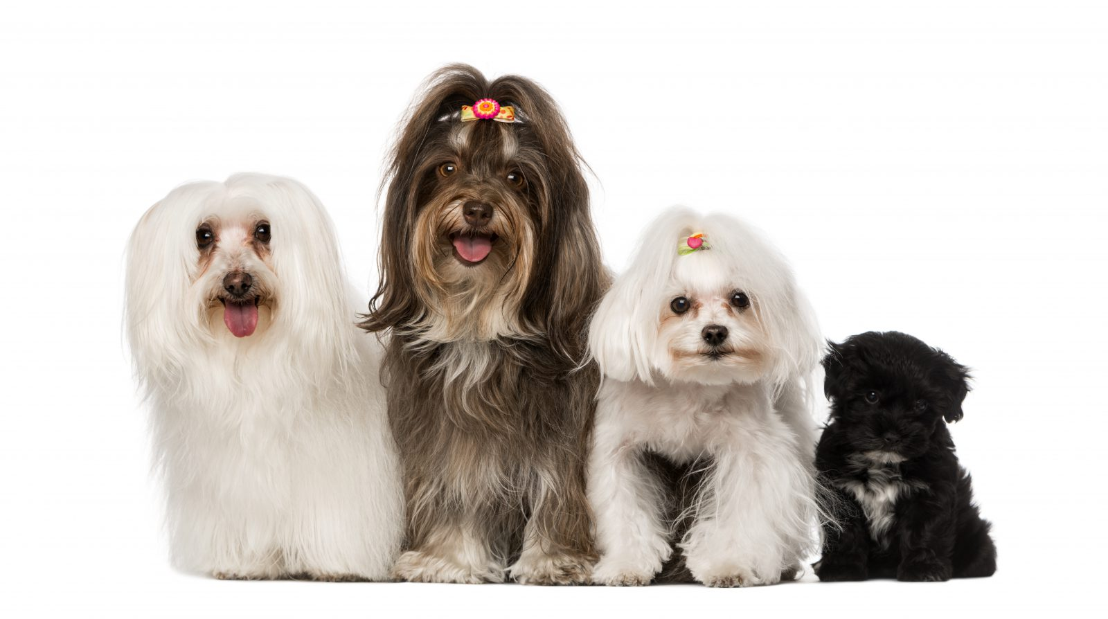Nomes de cachorro: grupo de filhotes de cachorro