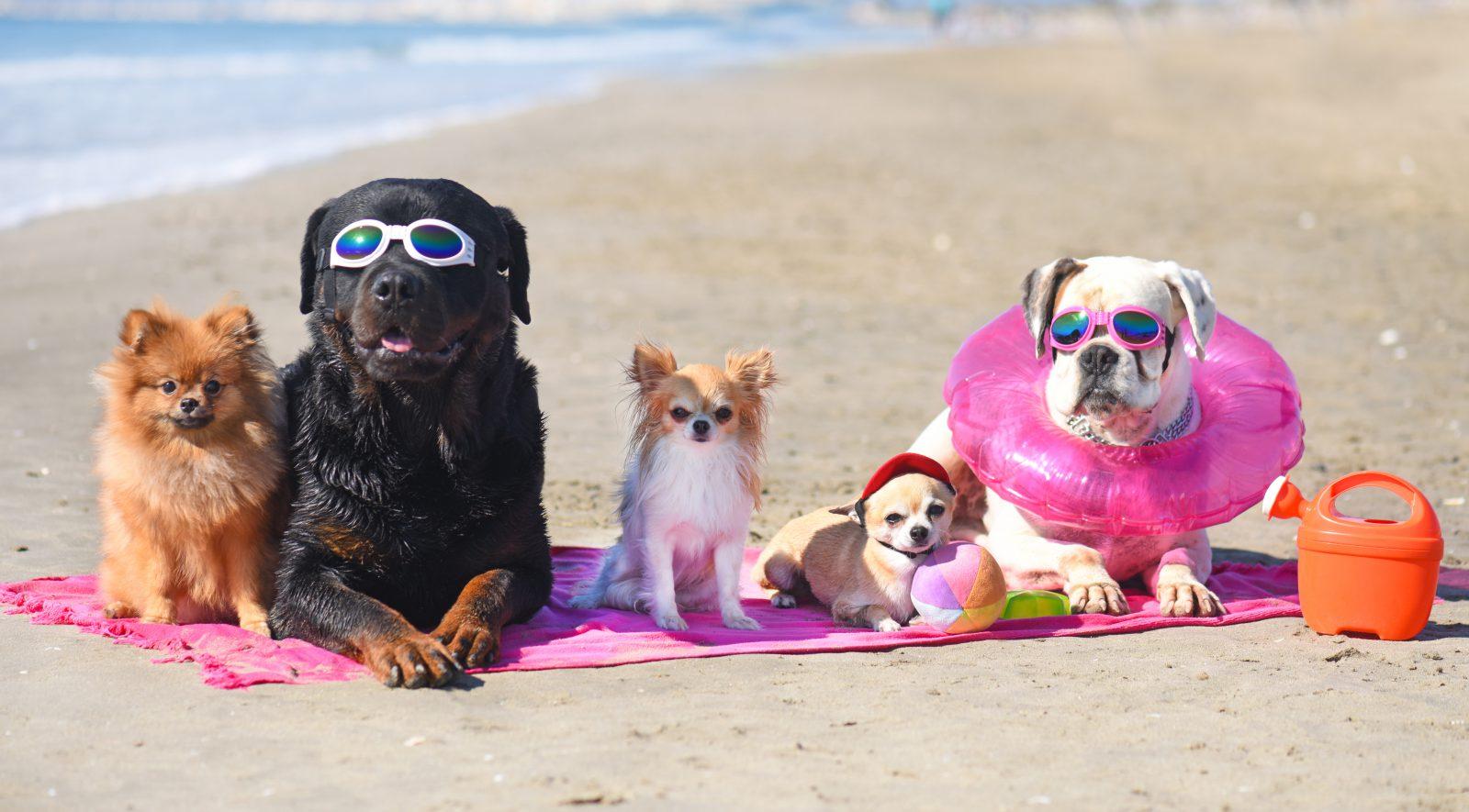 Nomes de cachorro: grupo de cachorros de diferentes raças na praia